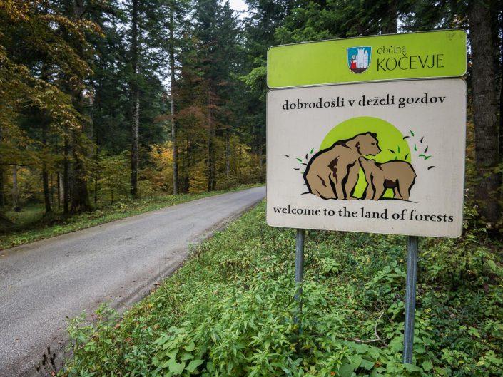 Straße mit Hinweisschild, Bären in Slowenien