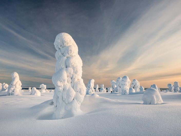 verschneite Bäume im Riisitunturi Nationalpark, Finnland