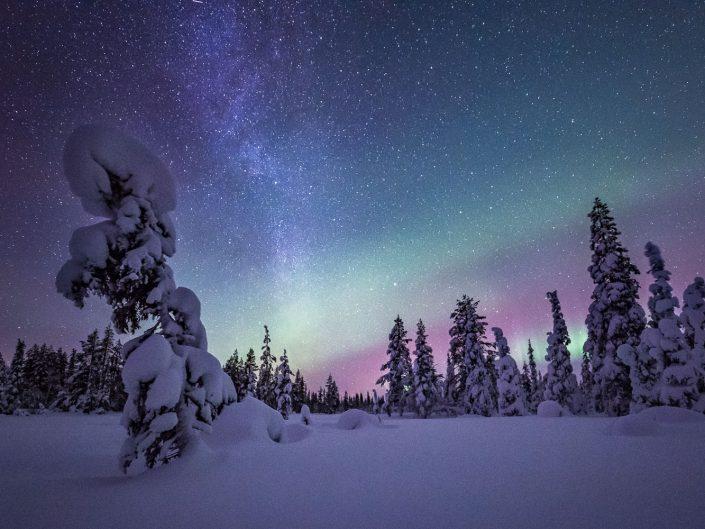 Nordlicht und Sternenhimmel über verschneiten Bäumen, Pallas Yllästunturi Nationalpark