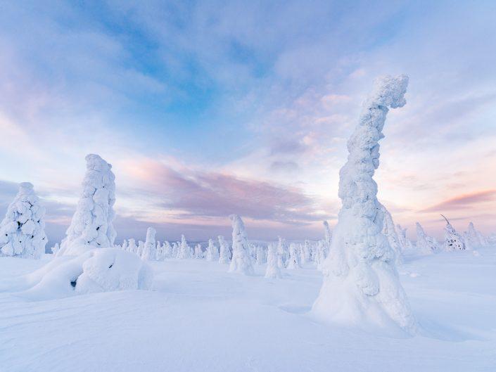 verschneite Landschaft im Riisitunturi Nationalpark, Finnland