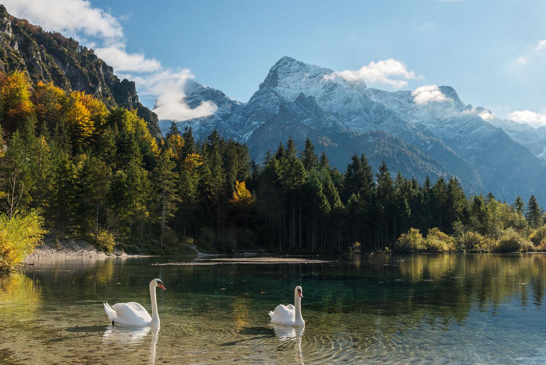 Landschaft am Almsee mit Schwänen und Bergen