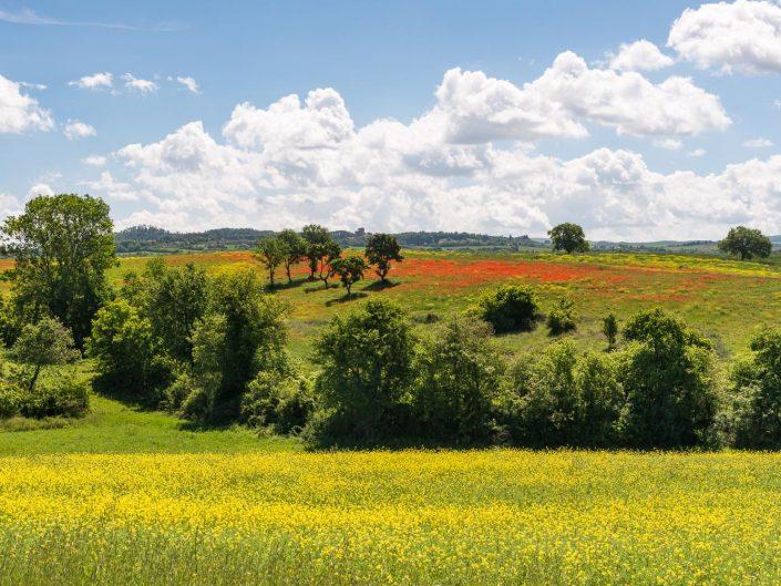 Landschaft mit blühendem Mohnblumenfeld, Toskana