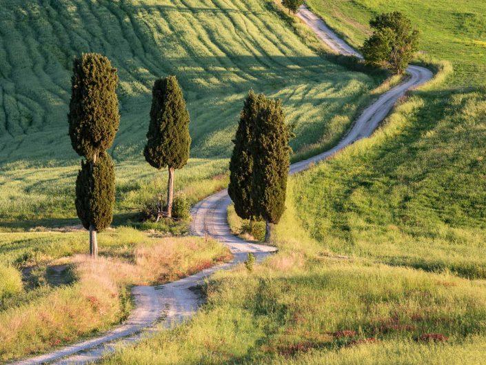 Weg durch Felder und Zypressen, Pienza, Toskana