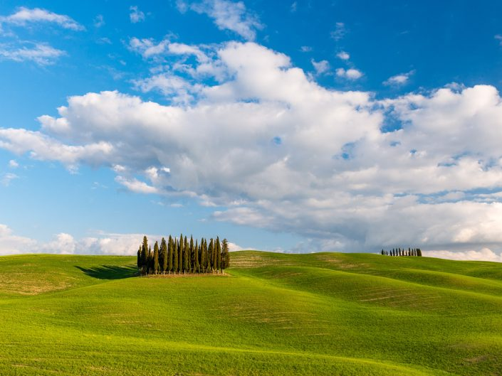 Zypressen auf Feld, Toskana, Italien