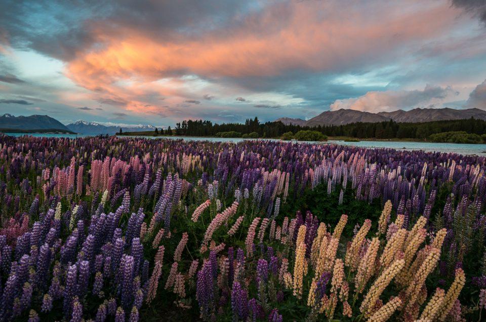 Neuseeland - Die Südinsel