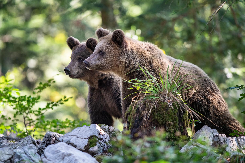 Zwei Bärengeschwister