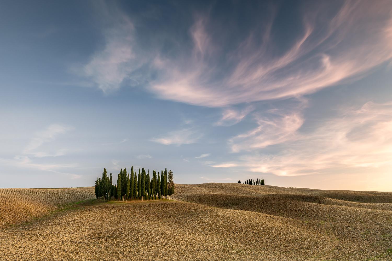 Zypressen auf Feld, Toskana