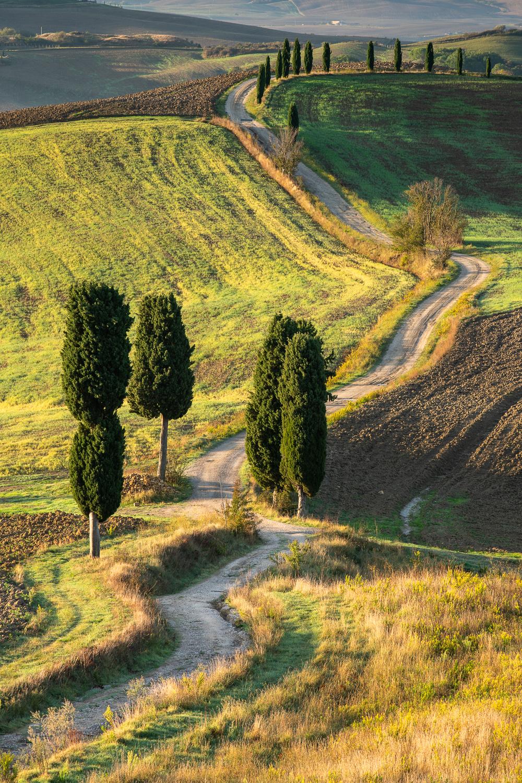 Weg mit Zypressen in Pienza, Toskana